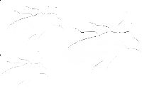 cockroaches icon